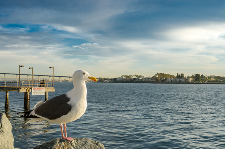 facing right: Seagull on rocks facing right over the San Diego marina Stock Photo