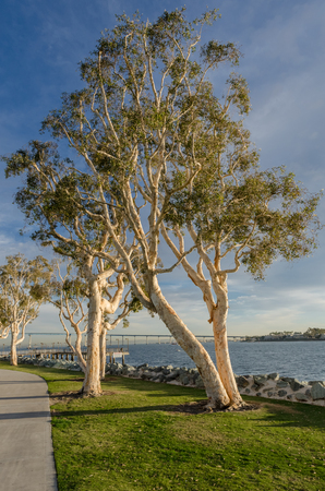 Convention Center: Trees at the edge of water along a walkway near the San Diego convention center Stock Photo
