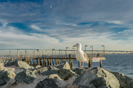 Seagull on Rocks facing left near San Diego harbor Stock fotó