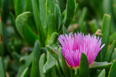 warm climate: Single pink flower from side in gardens
