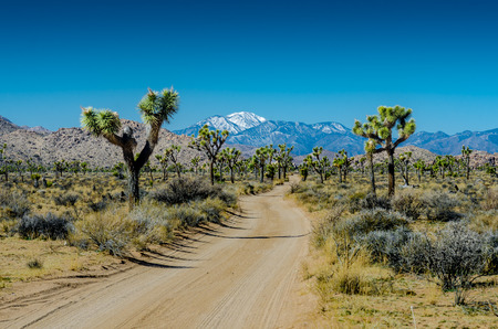 snow capped mountain: Snow capped mountain overlooks Joshua trees flanking dirt road in California desert