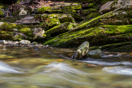 great smoky mountains national park: Snow melt rushes past mossy rocks along Deep Creek in the Great Smoky Mountains National Park