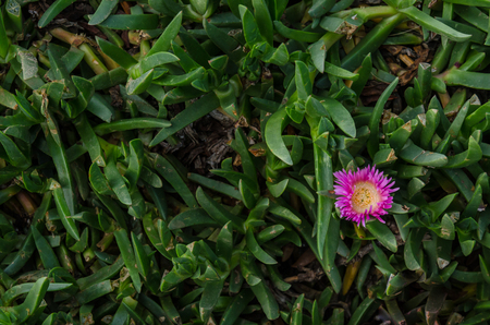 warm climate: Single pink flower in green stems background image