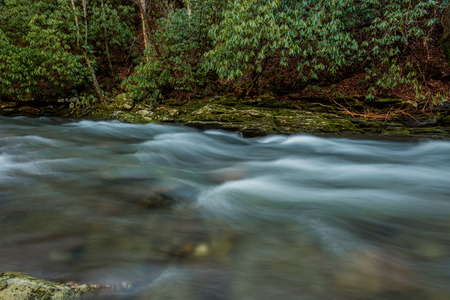 great smoky mountains national park: Water rushing past rhododendron trees in Deep Creek in the Great Smoky Mountains National Park