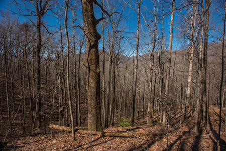 great smoky mountains national park: Winter view of Appalachian Forest in the Great Smoky Mountains National Park Stock Photo