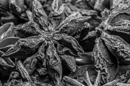 intricate: Black and White Focus on Single Star in Group of Star Anise shows the intricate texture of the spice Stock Photo