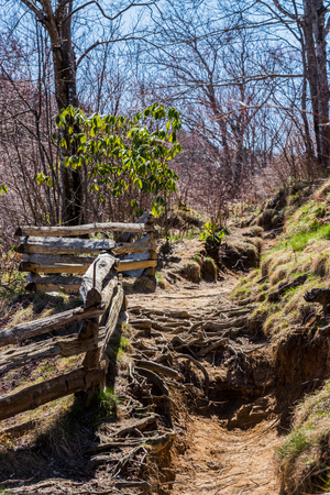 covered fields: Root covered trail next to split rail fence near the Graveyard Fields trail along the Blue Ridge Parkway