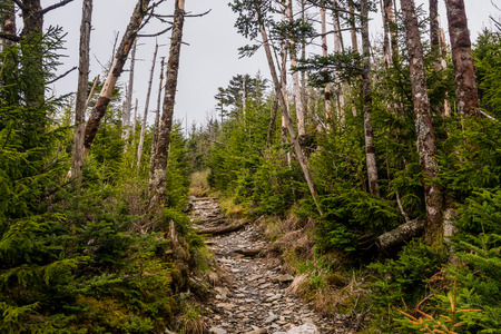 great smoky mountains national park: Trail to Mount LeConte Village in the Great Smoky Mountains National Park