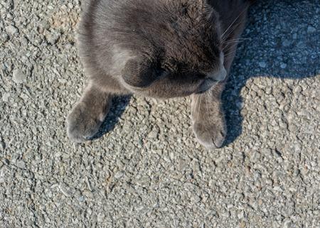 basking: Paws of a Lucky Farm Cat basking in the sun on warm asphalt Stock Photo