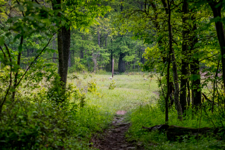 appalachian trail: Exiting The Woods to Follow Appalachian Trail White Blaze in clearing Stock Photo