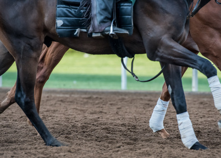 stirrup: Powerful Legs in the Dirt track with copy space Stock Photo