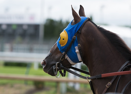 bridle: Horse with Blue and Yellow Blinkers and leather bridle