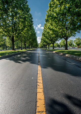lined: Middle of Tree Lined Road in midday