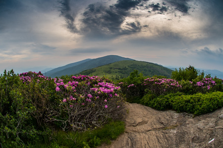 creep: Swirling Clouds Over Jane Bald with Rhododendron as sunset light begins to creep into the sky Stock Photo