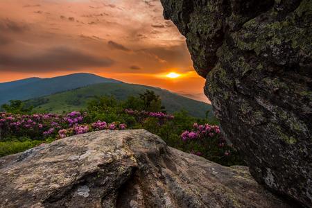 jane: Vibrant Sunset Behind Jane Bald Rhododendron