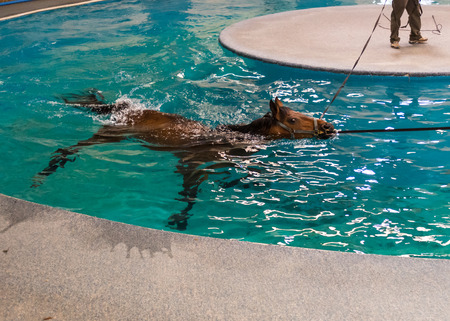 reigns: Horse Pool Rehab allows horses to recover from injuries safely Stock Photo