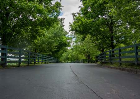 low  angle: Low Angle of Fence Lined Road in Kentucky