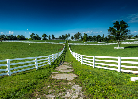 bluegrass: The Path Between Fields on a horse farm in rural Kentucky