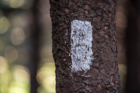 tree detail: White Blaze on the Appalachian Trail Horizontal with blurry forest behind