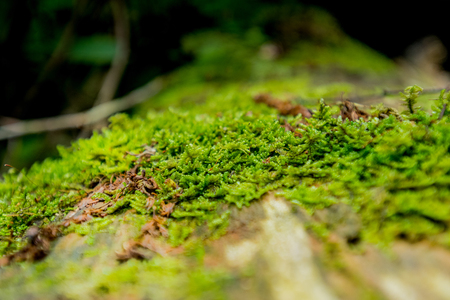 great smokies: Close Up of Bright Green Moss of Log with selective focus