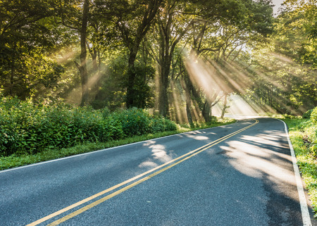 shafts: Shafts of Light in Fog on Country Road through forest Stock Photo