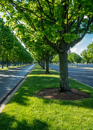 Trees Lining the Road at Keeneland during a Kentucky summer Stock Photo
