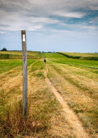 appalachian: Appalachian Trail Blaze in Open Corn Field in summer
