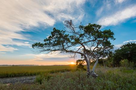 intercoastal: Tree at Sunrise on Tybee Island just outside Fort Pulaski