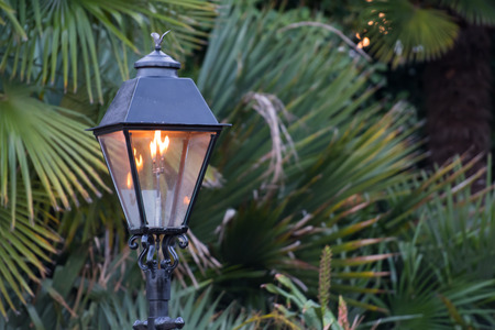 shrubbery: Gas Lamp with Copy Space to Right over spiky shrubbery
