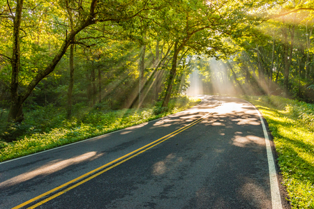 Bright Shafts of Light Around the Corner on drive through forest