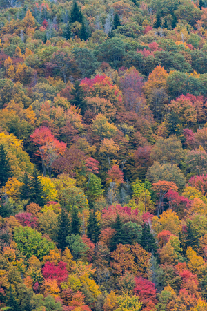 changing color: Forest Canopy Changing Color During Autumn Stock Photo