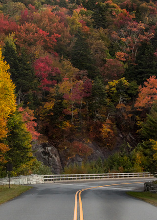 changing color: Wall of Trees Changing Color around bend in Blue Ridge Parkway