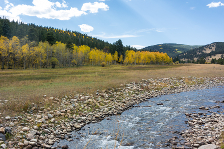 Creek and Field in Front of Aspen and Pine Forest