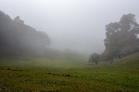 cow pasture: Thick Fog in Cow Pasture in rural North Carolina Stock Photo