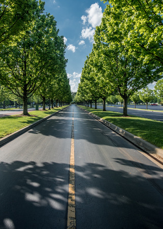 Looking down the Tree Lined Road on a summer afternoon Imagens