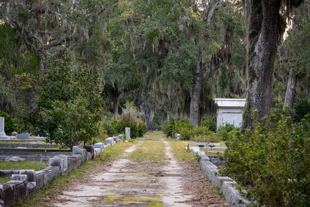 tombstones: Grave Lined Dirt Road through spanish moss covered like oak trees in cemetary