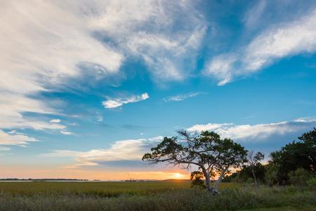tybee island: Big Sky and Small Tree on Tybee Island at Sunrise