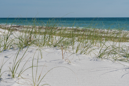 sea oats: Sea Oats with Blue Gulf Waters and soft white sand