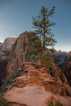 Tree Grows Along Trail to Angels Landing in Zion Stock Photo