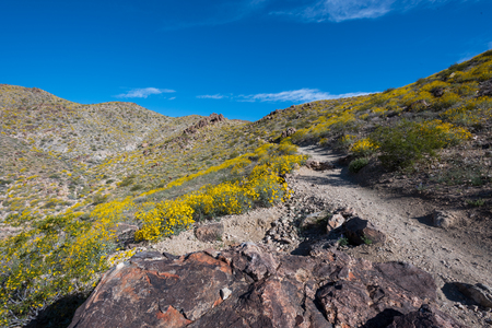 Bright Yellow Flowers Contrast Blue Sky in Desert mountains Stock Photo