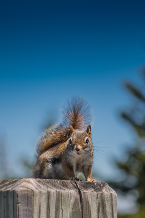 Hungry Squirrel Begs for Food at park rest stop