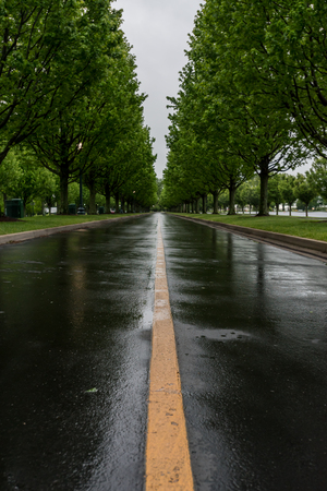Yellow Stripe of Wet Tree Lined Road on Rainy Morning Imagens