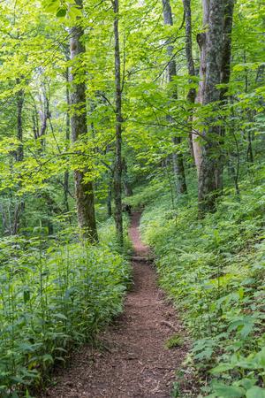 appalachian: Lush Green Appalachian Trail Headed South through the Smokies