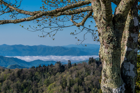 great smokies: Fog Hangs in the Valley in Early Spring in the Smoky Mountains