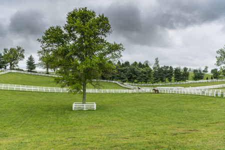 Protected Tree in Horse Paddock on overcast day