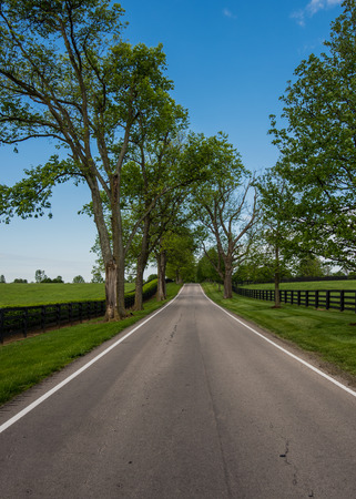 Tree Lined Country Road Through Horse Farm in Kentucky countryside