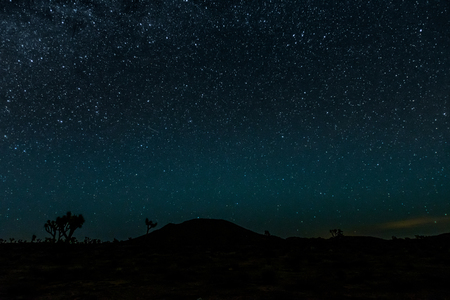 joshua: Bright Stars over Joshua Tree Desert Scene