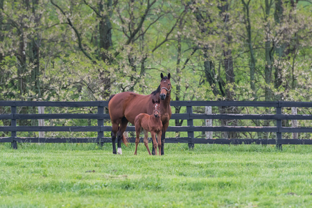Foal and Mare Stand in Paddock in Early Spring Field Imagens