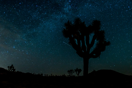 joshua: Stars Over Silhouette of Joshua Tree with glowing milky way