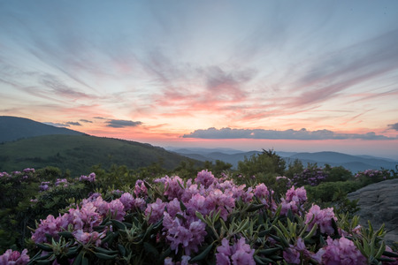 Pale Pink Sky Mirrors Pink Rhododendron in Appalachian mountains Stock Photo